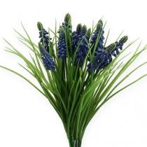 Druvhyacinter 28cm - 30cm blå 15st