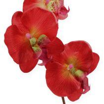 Dekorativ orkidéröd 68cm