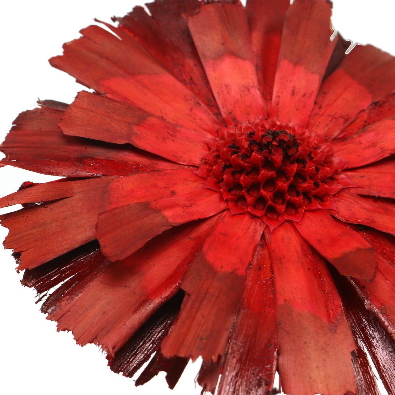 Repens rosett röd 8cm - 9cm 25st