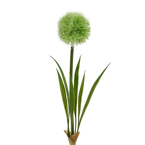 Allium Green L37.5cm 4st