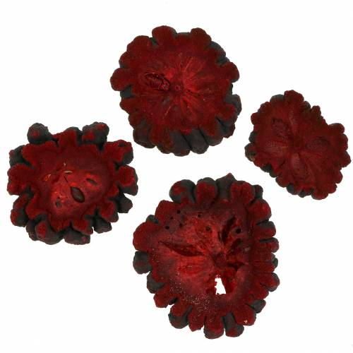 Dekorativa fruktskivor är en fruktröd 1 kg