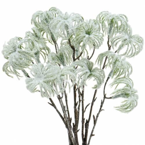 Clematis grön snöad 43 cm 3st