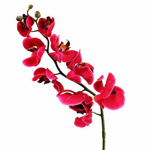 Dekorativ orkidé i fuchsia 77cm
