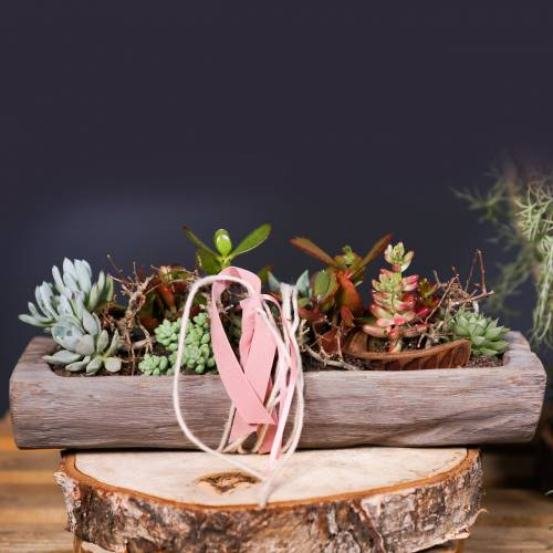 Dekorativ skål Paulownia trä 49cm x 14cm H7cm