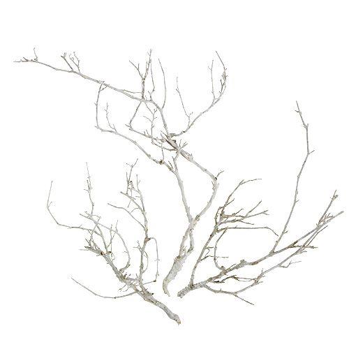 Torra trädvita tvättade 500 g