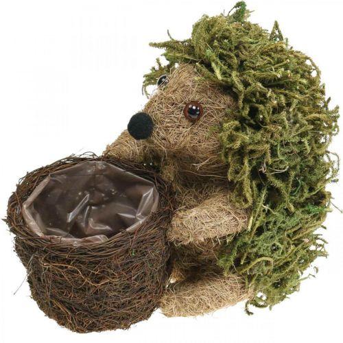 Igelkott med korggrön, höstdekoration för plantering, dekorativ växtkorg H24cm Ø9,5cm