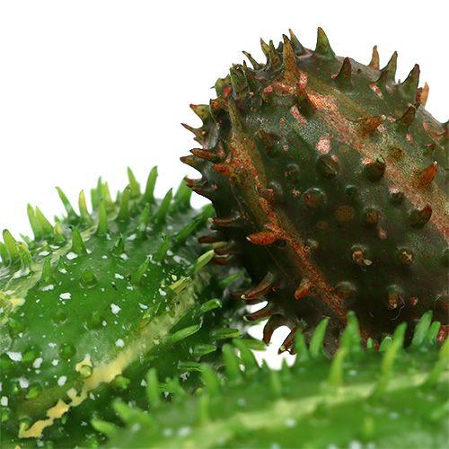 Prickly pear 5cm grönbrun 6st