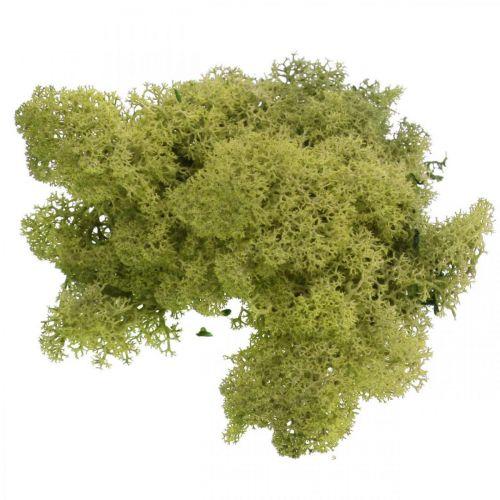 Dekorativ mossa för hantverk Ljusgrön naturmossa konserverad 40g