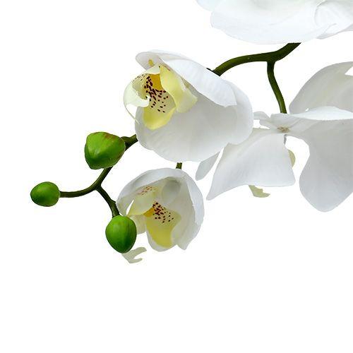 Moth orchid 75cm vit