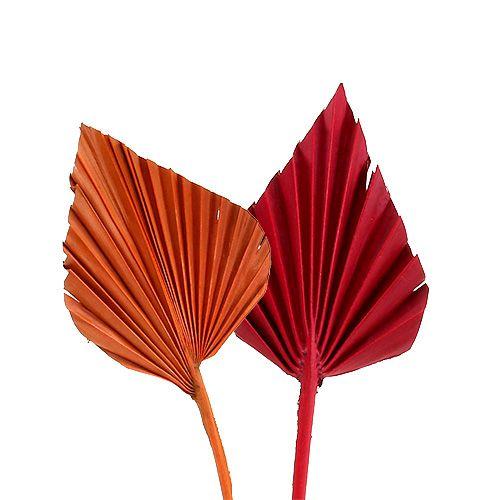 Palmspear mini röv. Röd / orange 100st