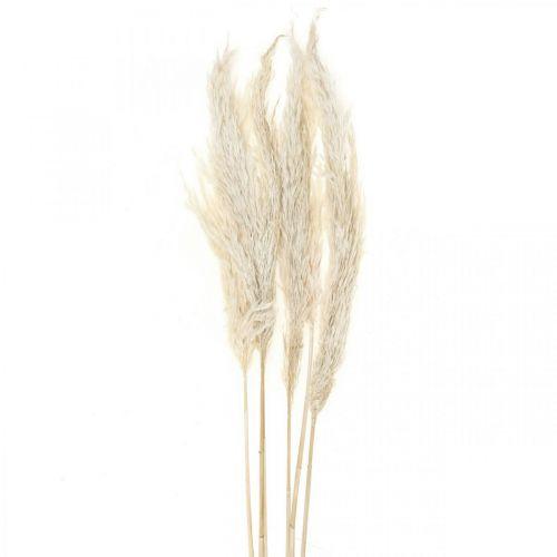 Pampas gräs torkad blekt torr dekoration 65-75cm 6st i ett gäng