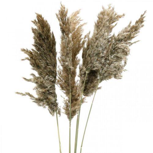 Torkat pampasgräs naturligt För torkning av bukett 70-75cm 6st