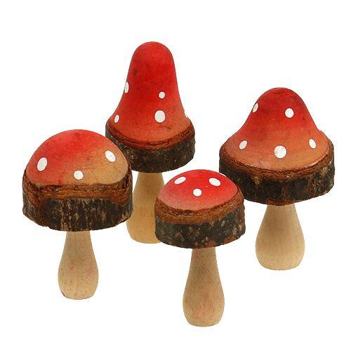 Träsvamp blandar 5,5 cm - 8 cm 8 st