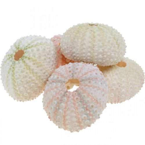 Maritimt deco sjöborrehölje rosa, vit scatter deco 55st