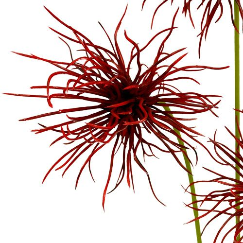 Silkeblommor Xanthium Bordeaux 64cm 4st