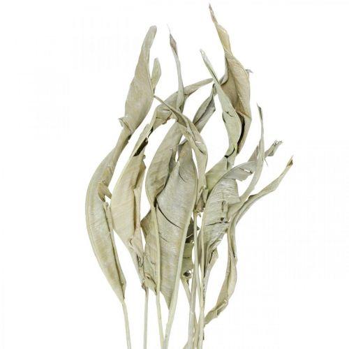 Strelitzia löv torkad grön frostat 45-80cm 10st