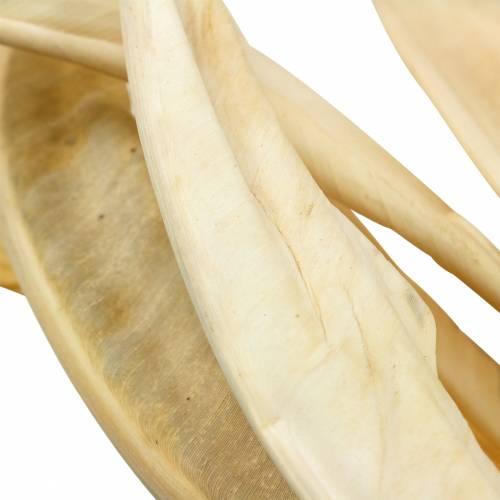 Strelitzia lämnar blekt 10st torr dekoration