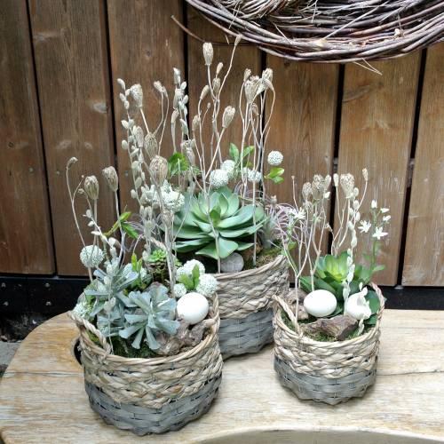 Suckulent växt konstgjord grön 27cm