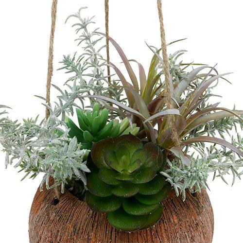 Saftigt grönt i en kruka för att hänga 24cm
