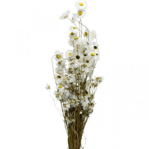 Torkade blommor Acroclinium Vita blommor Torkade blommor 60g