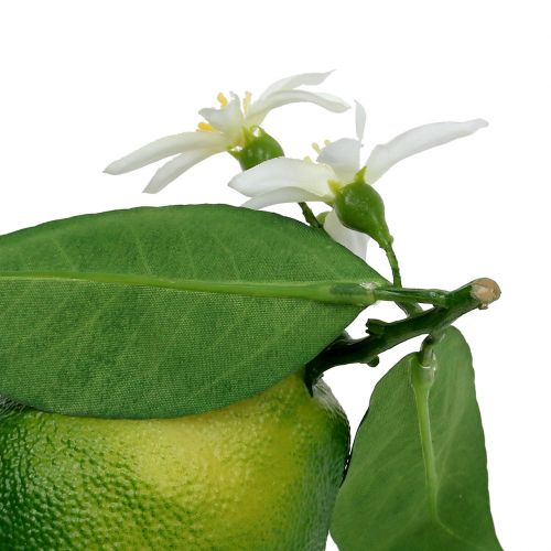 Citroner med blom 9,5 cm grön 4st