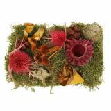 Torr blomsterblandning med kottar och mossröd 150g höstdekoration